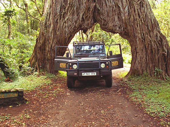 Tansania Safari Affenbrotbaum
