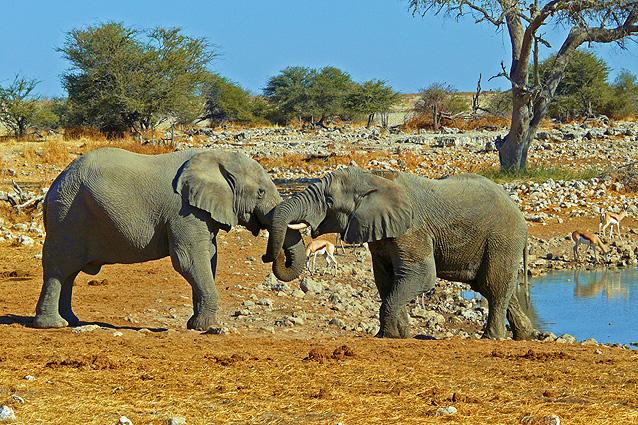 Namibia Safari Elefanten