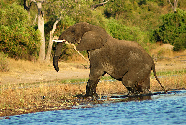 Namibia Safari Elefant