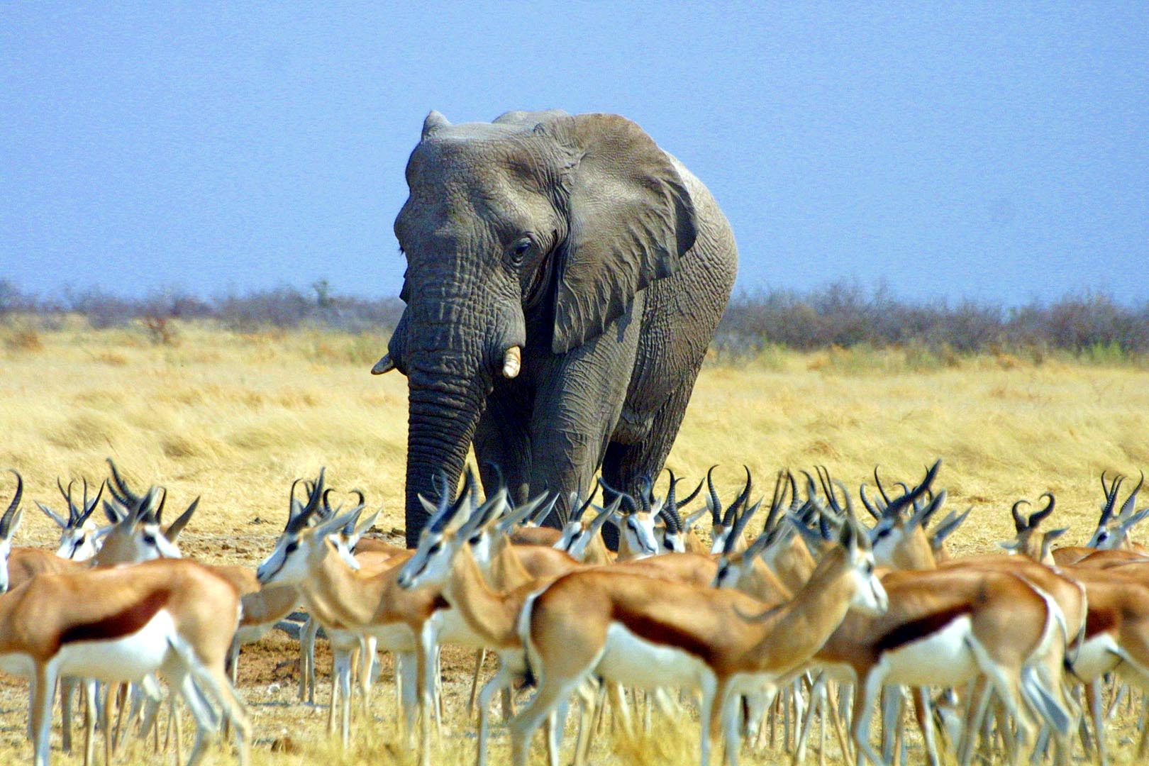 Namibia Safari Elefant