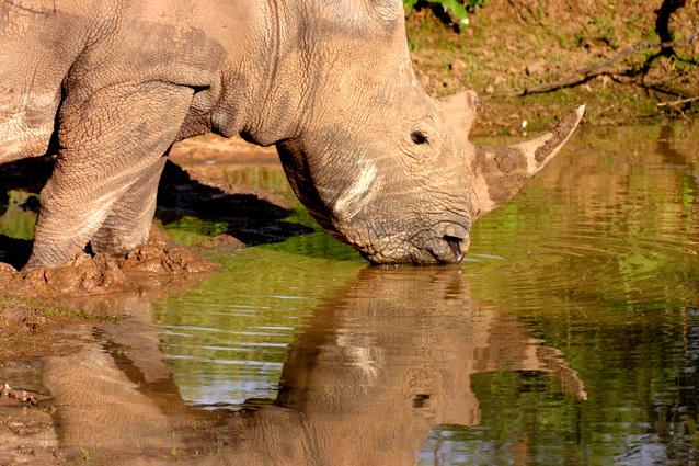 Namibia Safari Nashorn