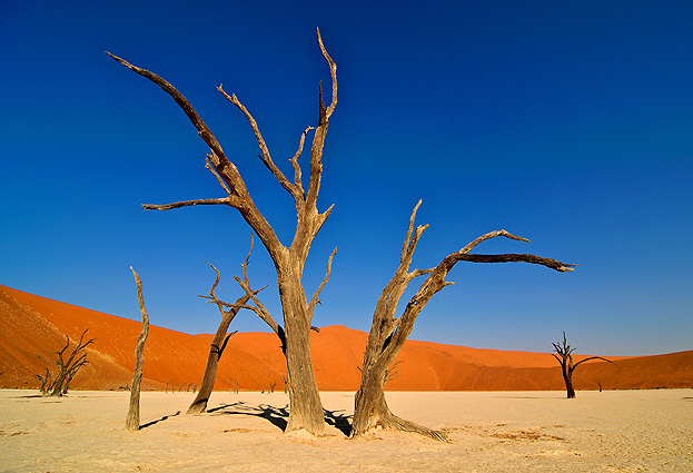 Namibia Safari Sossusvlei