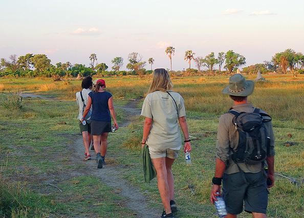 Botswana Safari Pirsch