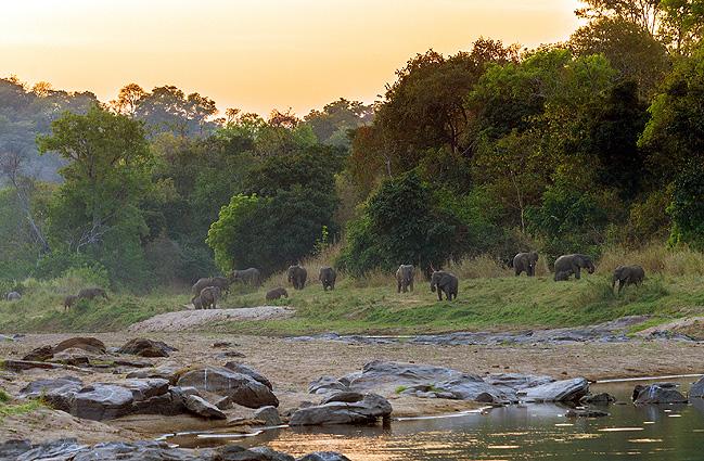 Malawi - Sambia Safari Elefanten