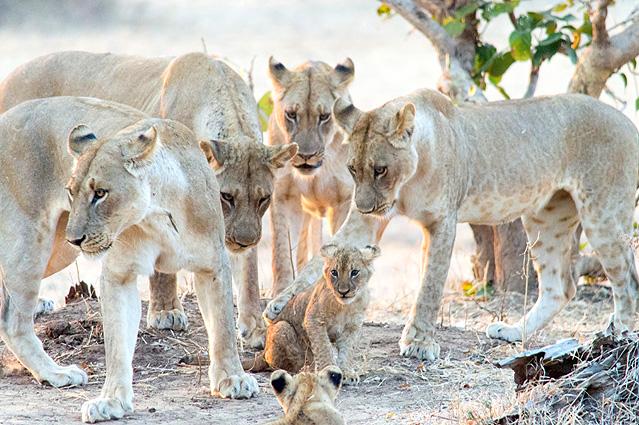 Malawi - Sambia Safari Loewen