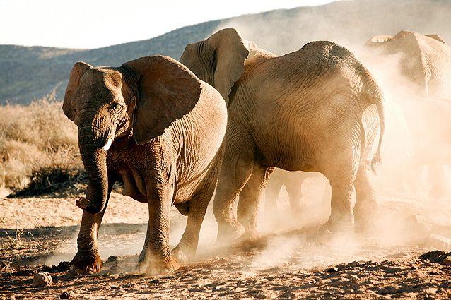 Namibia Safari Okambara Elefanten