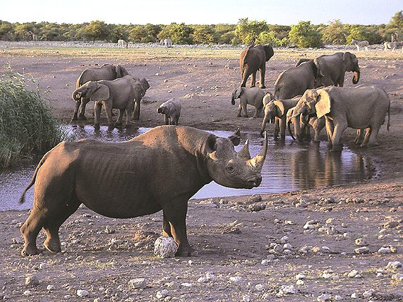 Namibia Rundreise Nashorn und Elefanten