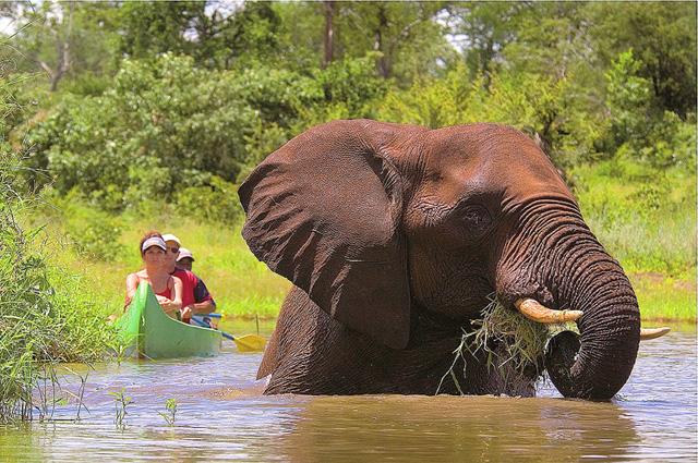 Namibia - Botswana Safari Elefant im Fluss