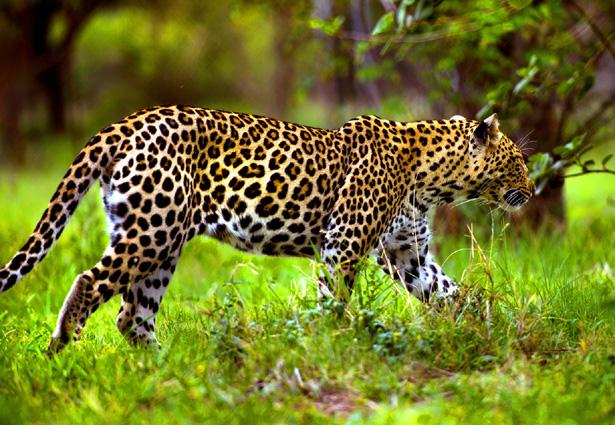 Südafrika Erlebnisrundreise Kruger NP