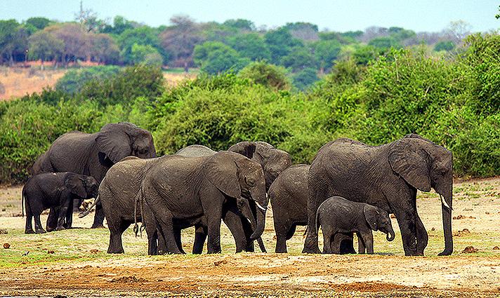 Botswana Spezial - Lodge Safari, Elefanten