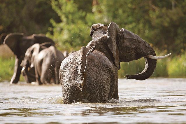 Uganda Safari Elefanten